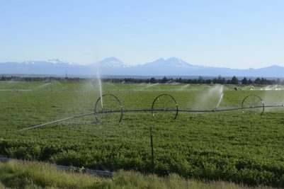 Alfafa-and-irrigation-sprinkers-near-Bend-OR-George-Wuerthner-4150-768x512